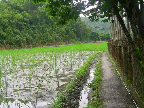 Green onion fields in Sanshing