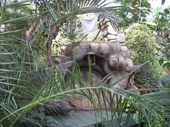 AWITP_June7_08_29.jpg (Adrian J.K. Shum, CGD) Tags: nature winnipeg florafauna muhsashumblogspotcom