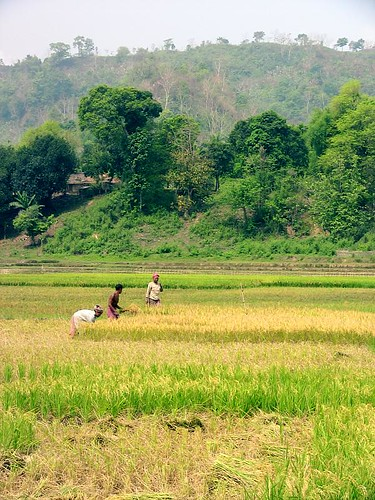 Farming in the Chittagong Hill-Tracts