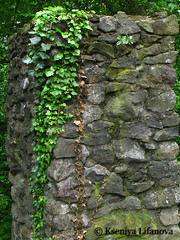 Ivy ruins (K_Liff) Tags: green castle ruin ivy ukraine zakarpattia nevicke