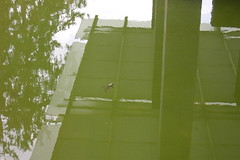 Frosch (Stina Ash) Tags: green water mirror frog likeapainting