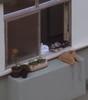 (saali) Tags: spy janela bustie