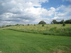 IMG_3865.JPG (msalmi78) Tags: summer field clouds bayport stillwater mn