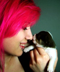 Day 160 - Puppy Love (like_shipwrecks) Tags: pink selfportrait chihuahua puppy lipring nosering 365 awww piercings pinkhair septumpiercing chihuahuapuppy 365days july162008