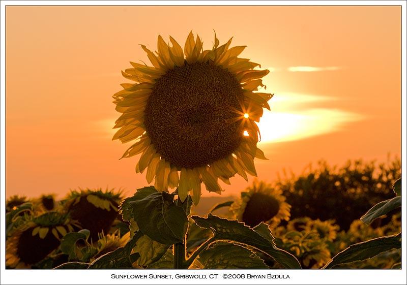 IMAGE: http://farm4.static.flickr.com/3121/2715938598_b188146b0b_o.jpg