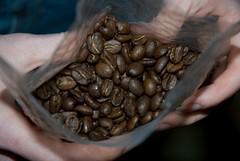 Kopi Luwak beans2