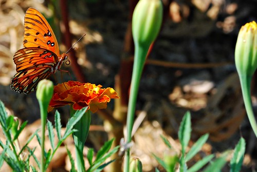 butterfly 3_filtered