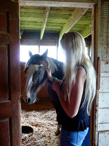 HorseFarm11.jpg by you.