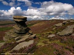 Derwent Edge (Roger B.) Tags: heather derwent derbyshire peakdistrict erosion moors tor darkpeak moorland millstonegrit weathering namurian
