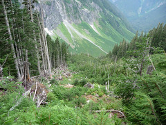 avalanche-damage (chrisgrier) Tags: hiking northerncascades