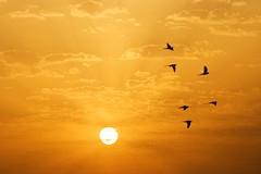 On the Way (shmarinuma) Tags: sunset sky cloud sun sunlight bird allrightsreserved blueribbonwinner justclouds anawesomeshot aplusphoto platinumheartaward llovemypics 100commentgroup shmarinuma