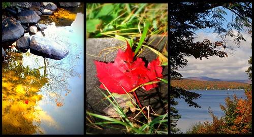 Collage de saison