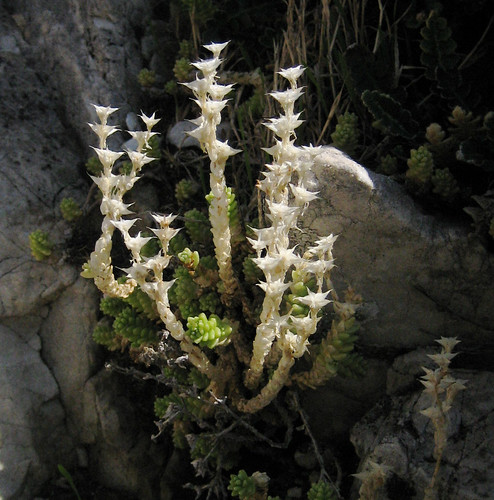 Mountain plant on Cerro Atalaya 1234m