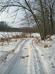Happy Trails (siskokid) Tags: trees winter snow nature woods trail fabulous snowmobile smrgsbord potofgold anawesomeshot aplusphoto diamondclassphotographer flickrdiamond fbdg rubyphotographer naturescreations