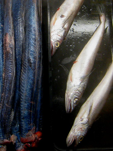 Red, Whiting and Blue Eels