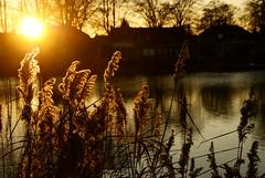 Tuindorpvijver, Hengelo (o) - kerst 2008 (lambertwm) Tags: sunset zonsondergang tramonto sonnenuntergang pôrdosol 日落 overijssel viewcount puestadelsol hengelo coucherdusoleil غروب 日没 tuindorpvijver hengeloo lwmfav