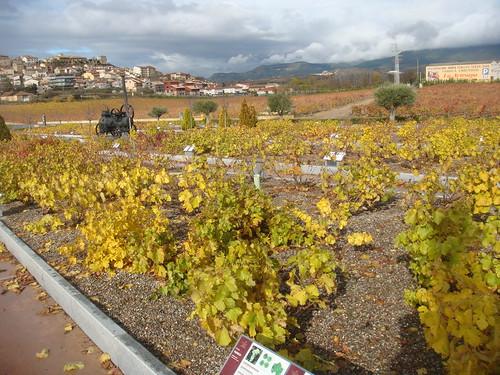 El Jardin de Baco - Museo del Vino