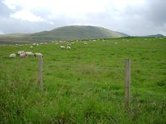 DSCN1862 (Zingraff) Tags: scotland glen dunkeld quaich