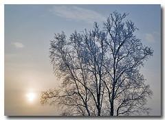 New Year's Day Sunrise (Ethan G. Knuti) Tags: winter sky snow sunrise hoarfrost birch stlouiscounty vosplusbellesphotos embarrassminnesota