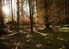 (mioke) Tags: trees sunlight forest moss shiny wald mioke