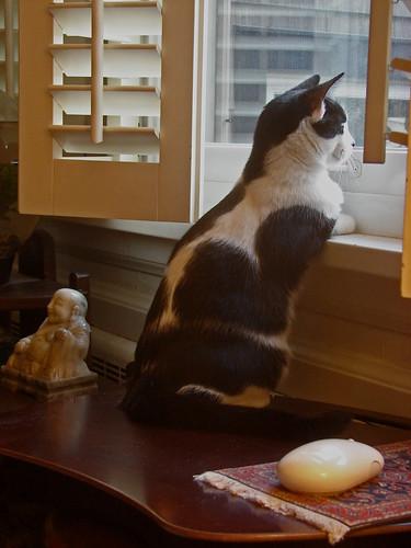 black & white kitten on the windowsill