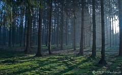 Woodland 1 (D.Reichardt) Tags: morning trees nature fog forest germany europe fabulous mystic watcher naturelovers visualconcept aplusphoto bramstedt goldstaraward