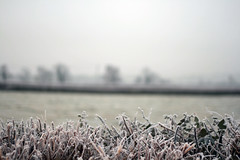 Hedgerow (Monkey Tennis) Tags: uk cold tree field countryside frost glastonbury freezing somerset minimal hedge westpennard