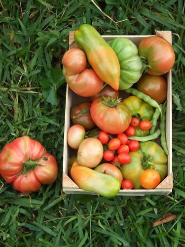 Harvest January 4