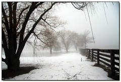 Fog VII (Lisa-S) Tags: winter white snow ontario canada tree fog rural canon fence landscape lisas allrightsreserved brampton 425 blueribbonwinner 50d golddragon canon50d betterthangood theperfectphotographer spiritofphotography vosplusbellesphotos copyrightlisastokes gicno