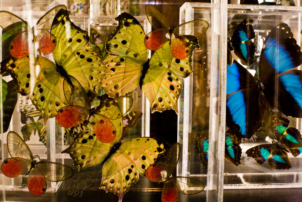 fancypants lepidoptery