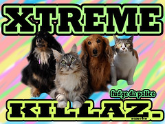 what i do in scoo (butal shit) Tags: dog pet baby pets color cute animals japan cat puppy fur losangeles kitten soft fuck extreme gang kitty cheetah lon awww related killers aw vamp xtreme dogers dogy killaz killas killerz raneko