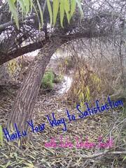 Haiku Your Way to Satisfaction