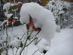 Snow hips in Putney