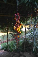 Beautiful Flowers (JING Tea) Tags: tea srilanka ceylon teapicking teapickers ceylontea