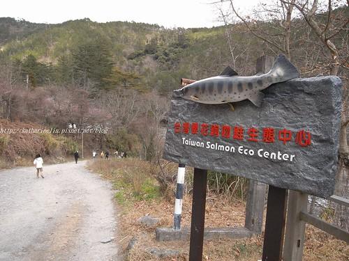 你拍攝的 4櫻花鉤吻鮭生態中心。