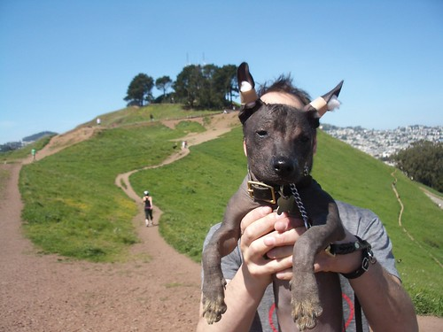 xdog in bernal