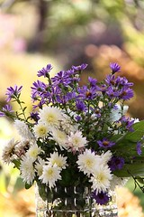 Last Bouquet of the Season (LongInt57) Tags: pink flowers stilllife white flower green glass yellow purple blossom blossoms clear bloom vase bouquet blooms chrysanthemum asters vases aster bouquets chrysanthemums