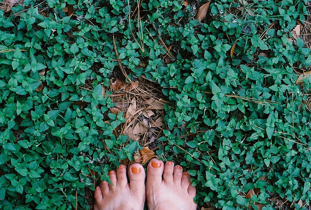 toes in the wilderness