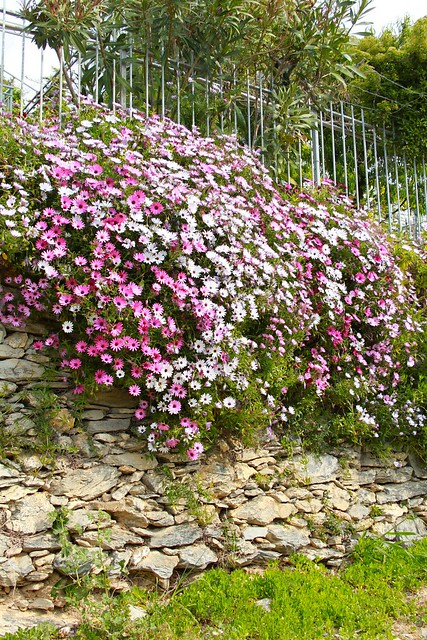 una cascata di fiori