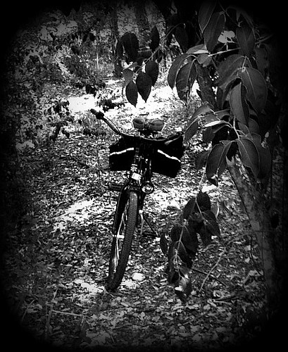 In the Trees (Geocaching via Bicycle at Brakenridge Park)