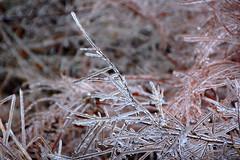 DSC_0051 (setao86) Tags: winter snow macro ice landscape frozen spring scenery frost icesickles