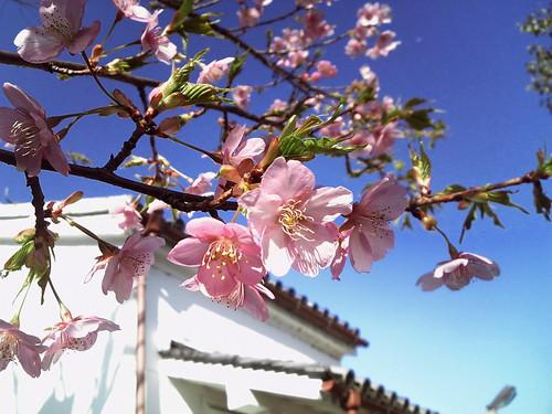 912SHで桜