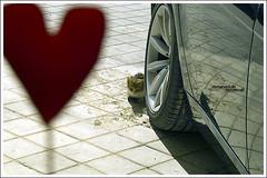 .I'll.Not.Pull.Her.Tail. (MiracleGirl) Tags: red slr car cat shot heart kitty sigma bmw meow ga6wa miraclegirl galb sd14