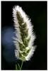 DSC_3752 (Sherwan™) Tags: sky flower macro nature photoshop nikon raw loveit pixels kurdistan kurd sherwan hewler irbil hawler d40x theunforgettablepictures کوردستان flickrestrellas alwayscomment5