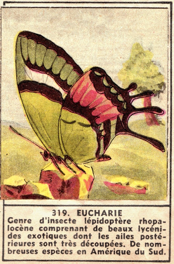 papilon 319