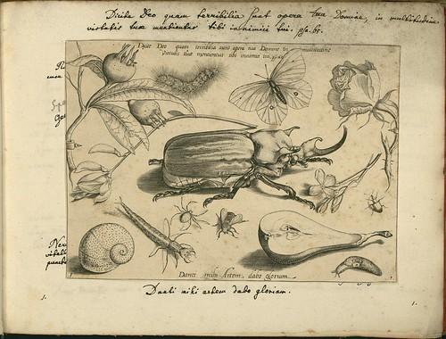 Archetypa studiaque patris - Joris Hoefnagel (1592) h