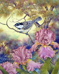 "AER 12 ""Black-capped Chickadee and Iris"" by A E Ruffing"
