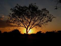 Caminho do Sol (Dircinha -) Tags: sunset pordosol tree nature brasil calendar photos rvore brasilia blueribbonphotography photosandcalendar mykindofpicturegallery dircinha natureselegantshots