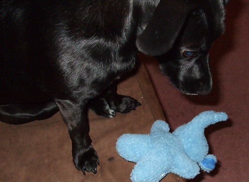 Raisin & Her New Elephant
