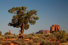 Monument Valley. Near North Window. 1784. (Tiina Gill (busy)) Tags: red arizona tree rock landscape monumentvalley supershot navaocountry